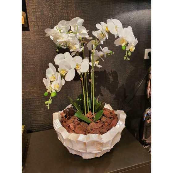 Schelpenvaas broken bowl opgemaakt met orchidee