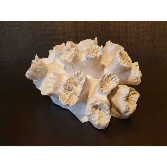 Wit koraal imitatie 8x14cm