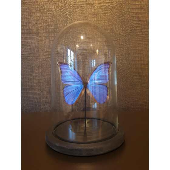 Vlinder in stolp 30 cm