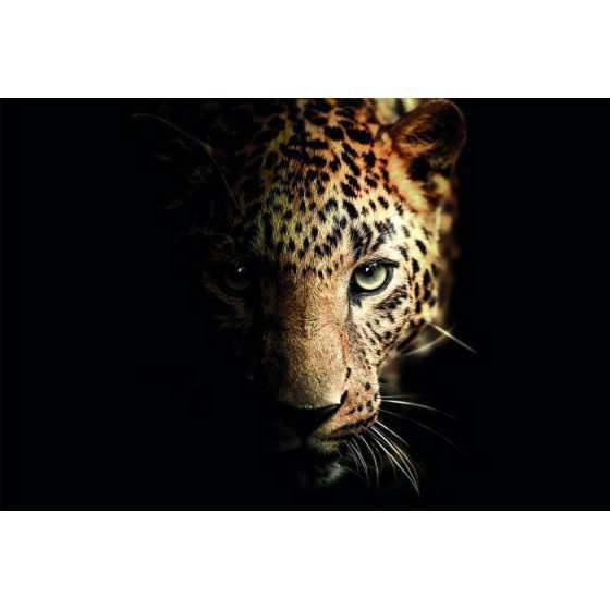 Glasschilderij luipaard 120x80 cm