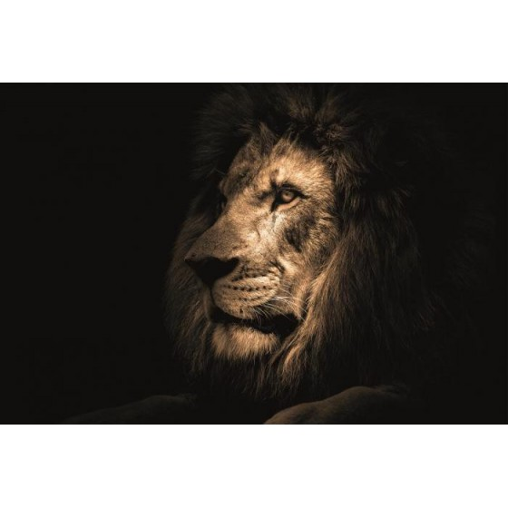 Glasschilderij leeuw 120x80 cm