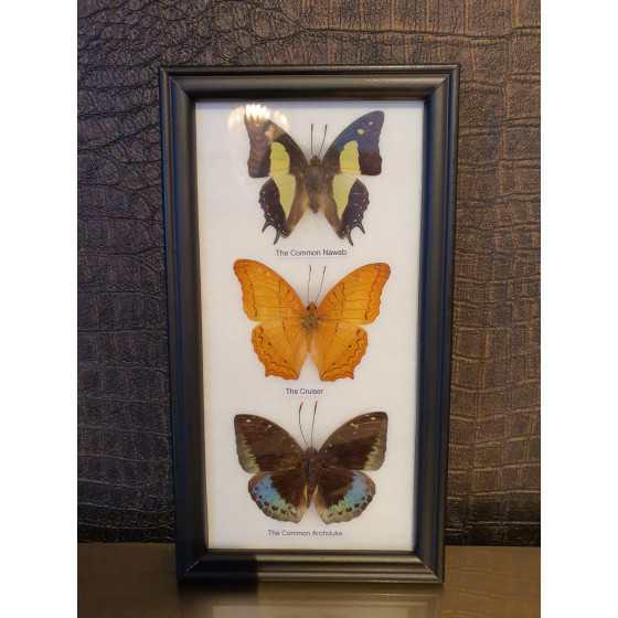 Fotolijst met vlinders 25x10cm