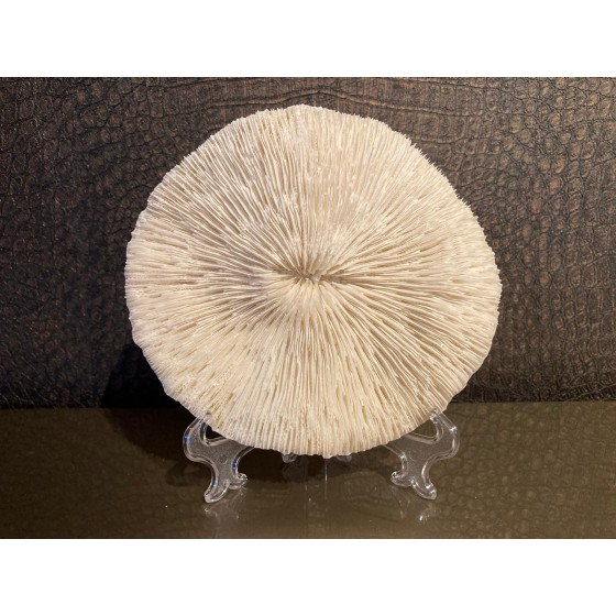 Imitatie koraal schijf rond wit 16x14x3
